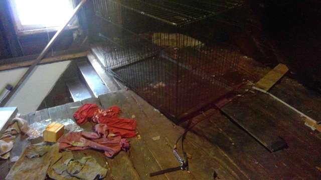 Les deux chiots retrouvés dans le grenier