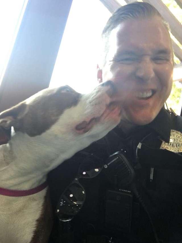 La chienne Pitbull remercie le policier