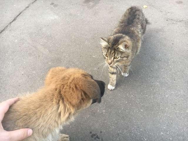 La rencontre entre Koshka et Jessie