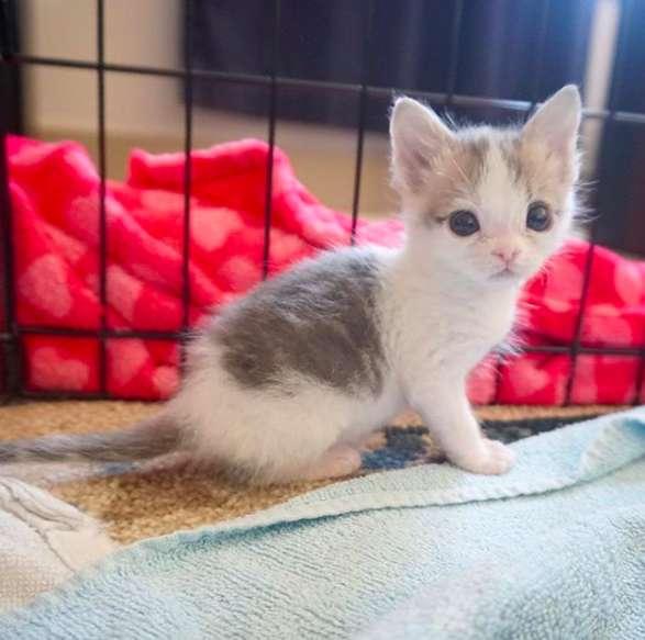 Gemma, la petite chatte miraculée