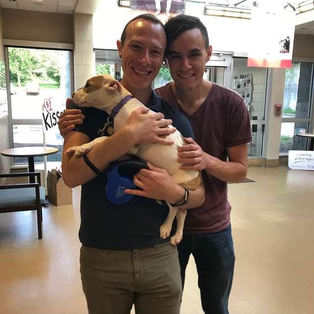 Les chiens dans leur nouvelle famille
