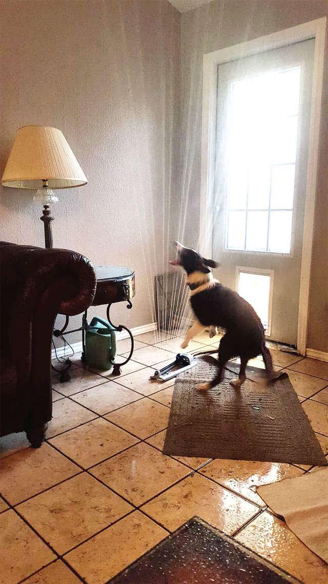 Baloo et le tuyau d'arrosage dans la maison: la bonne idée !