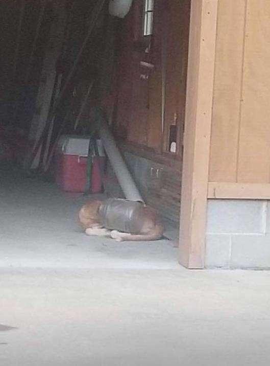 Le chien errant avec la tête coincée dans le bocal