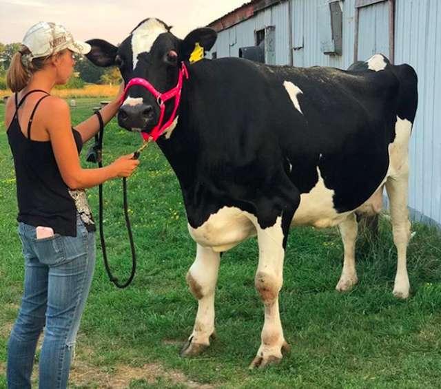Megan et la vieille vache aveugle