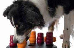 jeux de réflexion pour chiens