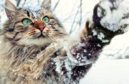 L'hiver et les chats