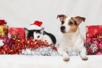 Le Noël des bêtes abandonnés