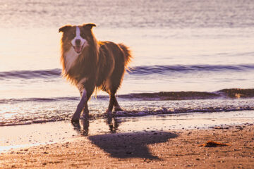 chien a la plage