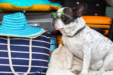 retour vacances chien