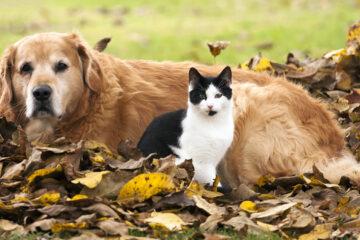danger automne chien chat