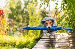 chien pluie activité