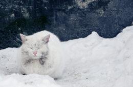 chat errant neige
