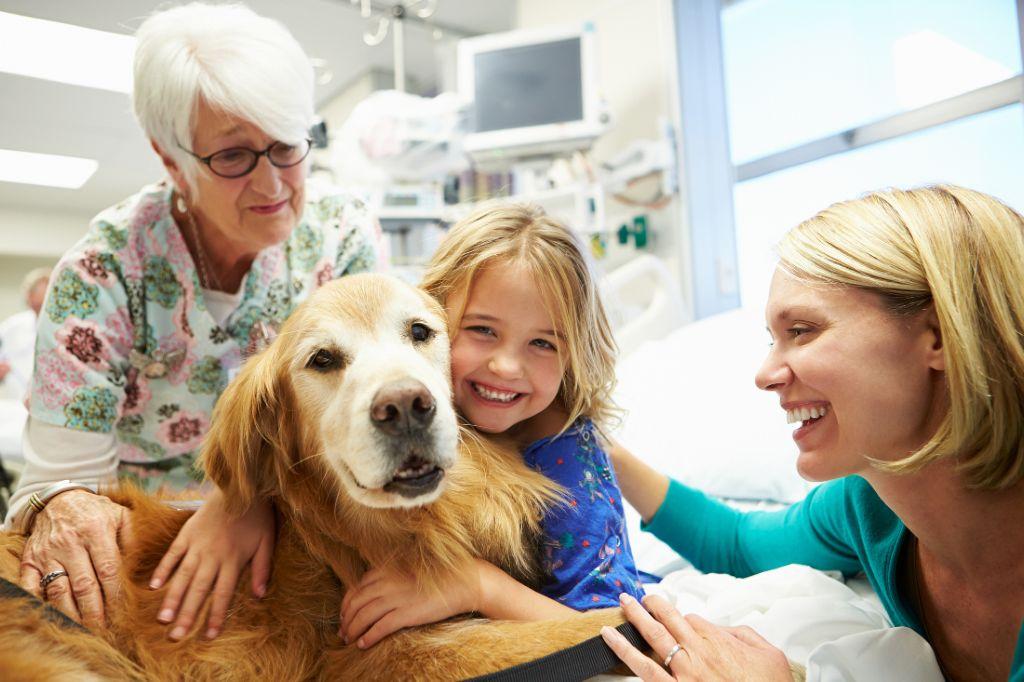 zoothérapie dans les hôpitaux