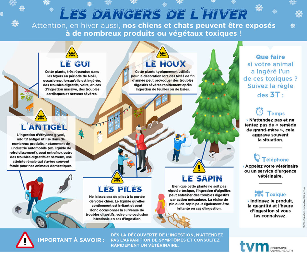 Infographie Dangers Hiver Chien/Chat