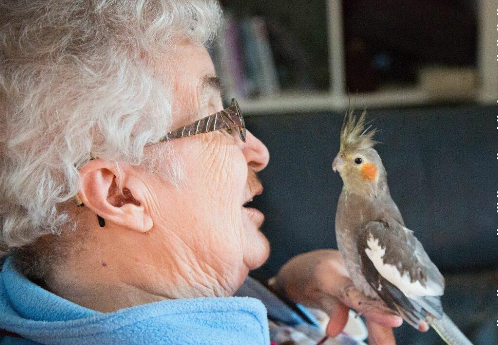 oiseaux pour senior
