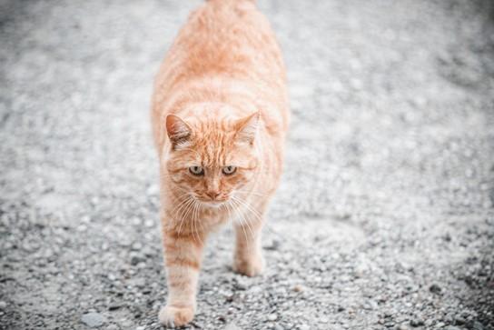 signes prise de poids chat